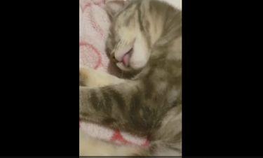 Απολαυστικό: Αυτή η γάτα κοιμάται και ονειρεύεται ότι τρώει... παγωτό! (vid)