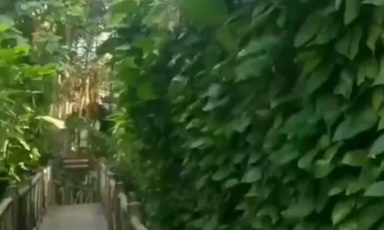 Έλληνας πρώην παίκτης του Survivor, τρέχει μέσα στη ζούγκλα! (vid)