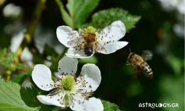 Μήπως είδες στον ύπνο σου μέλισσες;