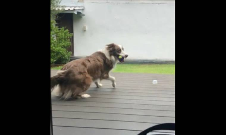 Το απίστευτο άλμα του σκύλου για να πιάσει το… μπαλάκι του