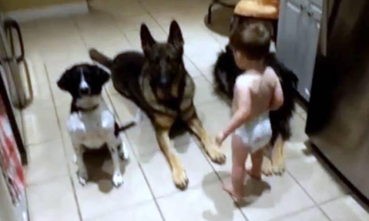 Τρυφερό! Στέκονται... σούζα μπροστά στον μπόμπιρα λίγο πριν εκείνος τα ταΐσει! (vid)