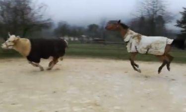 Κι όμως ο ταύρος του έκλεψε τη δόξα
