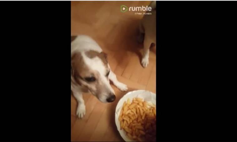 Και όμως τα σκυλάκια τρώνε τηγανιτές πατάτες!