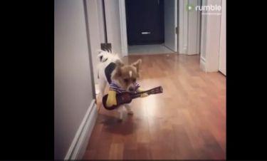 Δείτε τον σκύλο να παίζει κιθάρα!