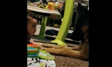 Μωρό και σκύλος, δυο καλοί φίλοι