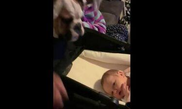 Αυτή η πρώτη συνάντηση του κουταβιού με το μωράκι, δεν θα ξεχαστεί ποτέ