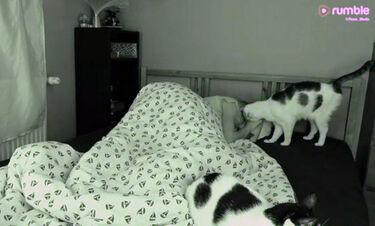Απίστευτη εμπειρία να κοιμάσαι με γάτες! (vid)