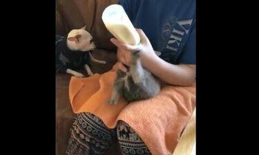 Δείτε τι κάνει αυτό το κουτάβι την ώρα που το ταΐζουν (video)