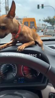 Ο σκύλος της Αλεξάνδρας Παναγιώταρου