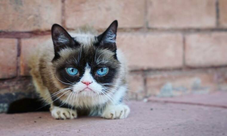 Grumpy Cat: Πέθανε η πιο αγαπημένη γκρινιάρα γάτα (photos+video)