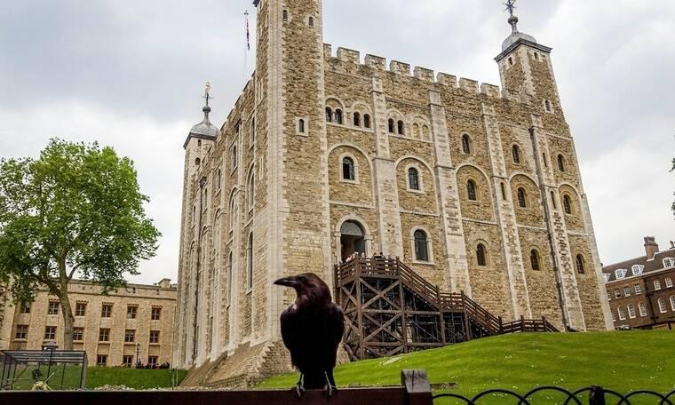 Απίστευτο! Σώζεται το Βασίλειο της Βρετανίας λόγω… γέννησης τεσσάρων κορακιών (photos)