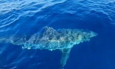 Τρομερό! Πήγαν για ψάρεμα αλλά τους πήρε στο κυνήγι καρχαρίας έξι μέτρων! (photos+video)