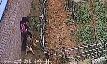 Ήρωας περαστικός έσωσε κοριτσάκι από αγέλη άγριων σκυλιών (photos+video)