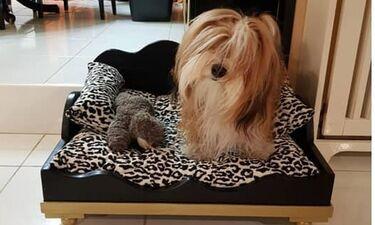 Το κρεβάτι που πήρε για το σκυλάκι του γνωστός ηθοποιός, μας έκανε να ζηλέψουμε! (photos)