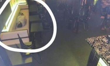 Το αφεντικό τον έπιασε να κοιμάται στη δουλειά - Η αντίδρασή του θα σας εκπλήξει (photos)
