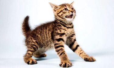 Οι γάτες είναι πιο αστείες απ' όσο νομίζεις ειδικά όταν δεν ξέρουν τι τους συμβαίνει (video)