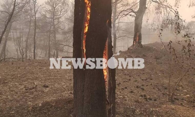 Φωτιά Εύβοια: Εκκενώθηκαν 4 οικισμοί. Καίγεται το χωριό Μακρυμάλλη - Προς τα Ψαχνά οι φλόγες