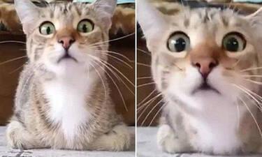 Και εσύ θα φοβόσουν αν έβλεπες αυτό που είδε η γάτα