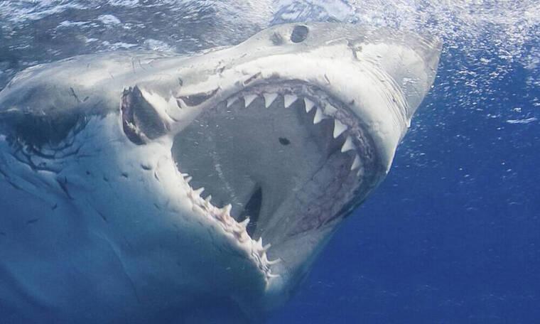 ΣΟΚ: Καρχαρίες κατασπάραξαν νεαρό ποδοσφαιριστή (photos)