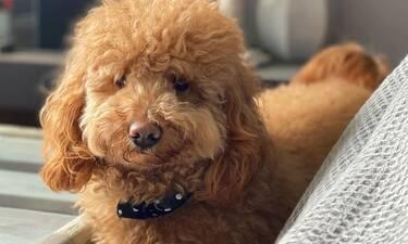 Αυτό είναι το πιο δημοφιλές σκυλί στην ελληνική TV και έχει και δική του σελίδα στο Instagram (pics)