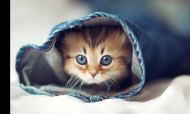 Ποια ονόματα θέλουν να ακούν οι γάτες;