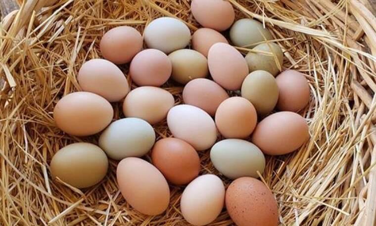 Πήγε στο κοτέτσι και έμεινε άφωνος - Τι χρώμα είχαν τα αβγά (pics)