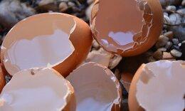 Έβαλε τσόφλια αυγού στο κομμένο χέρι - Δείτε γιατί και θα το κάνετε κι εσείς (video)