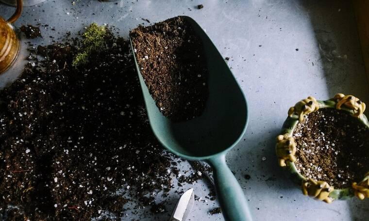 Αυτοί είναι οι λόγοι που πρέπει να βάζεις καφέ στις γλάστρες (photos)