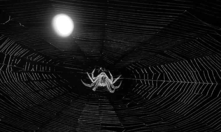 Είδε αράχνη στον υπολογιστή του - Δεν φαντάζεστε τι έκανε μετά (video)