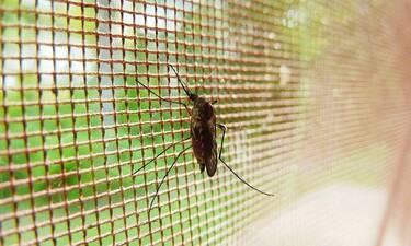 Μυστήριο: Αυτό το χωριό δεν έχει ούτε ένα… κουνούπι (pics)