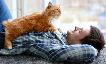 Μερικές αλήθειες για τις γάτες που πρέπει να μάθεις