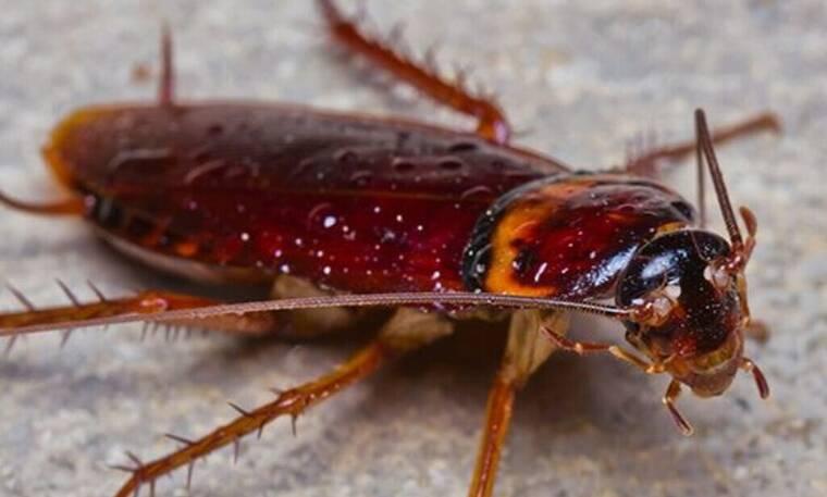 Δες ποιο είναι το λαχανικό που διώχνει τις κατσαρίδες