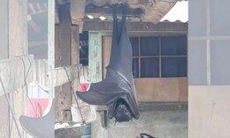 Χαμός στο Twitter με την «ανθρώπινη» ψεύτικη νυχτερίδα (photos)