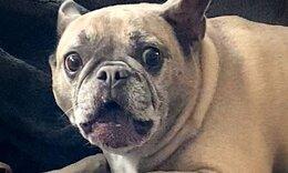 Ακούστε πώς κάνει αυτός ο σκύλος για να προστατεύσει το κόκαλο του (video)