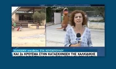 «Δεινόσαυρος» τρέχει πίσω από δημοσιογράφο της ΕΡΤ–Το βίντεο έχει γίνει viral