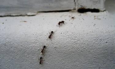 Έτσι θα απαλλαγείτε από ΌΛΑ τα έντομα στο σπίτι σας