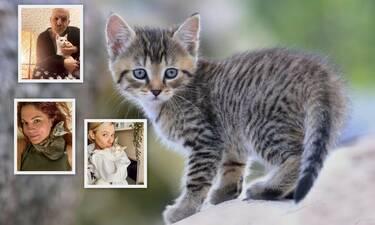 Παγκόσμια Ημέρα Γάτας: Αυτοί οι επώνυμοι τις έχουν λατρέψει! (Photos)