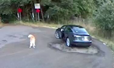 Αποκαλυπτικό βίντεο: Γυναίκα παράτησε τον σκύλο της σε πάρκο (video)