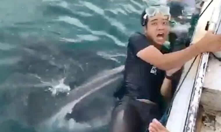 Επιχείρησε να βγάλει σέλφι με φαλαινοκαρχαρία! Λίγο αργότερα άρχισε να φωνάζει...