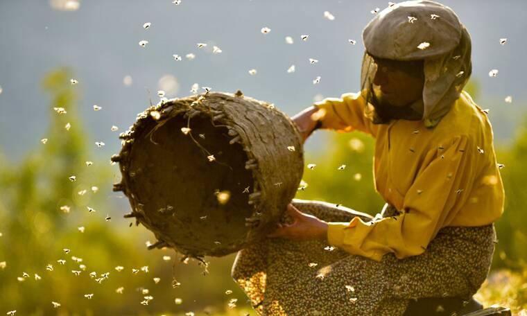 Έτσι θα καταλάβεις αν το μέλι σου είναι νοθευμένο