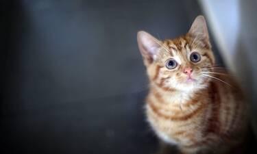 Τελικά πόσο ζουν οι γάτες;