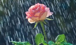 Σήμερα 25/09: Είναι η μέρα βροχερή...