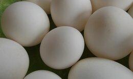 Αγόρασε αυγά από σούπερ μάρκετ - «Τρελάθηκε» μ' αυτό που βρήκε (video)