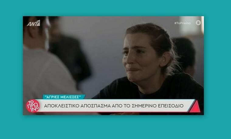 Άγριες Μέλισσες:Η στιγμή που η Ελένη μαθαίνει ότι ο Κυπραίος αυτοκτόνησε (Vid)