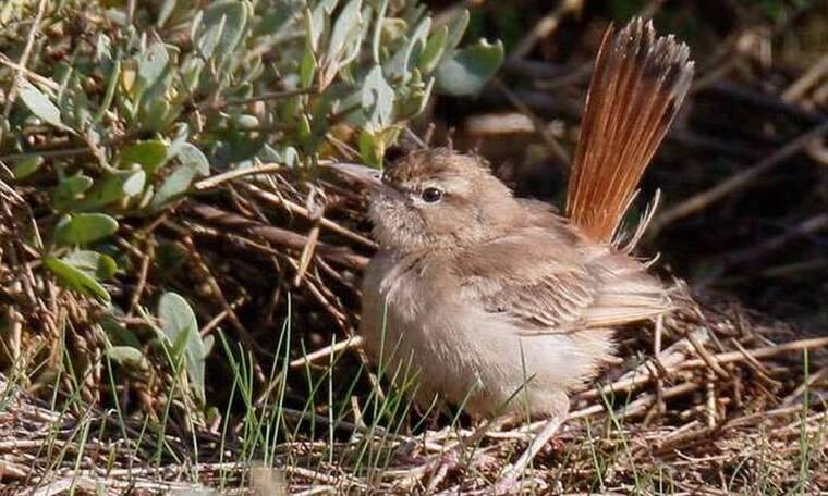 Κουφαηδόνι: Το σπάνιο πουλί που έκανε εκατοντάδες ανθρώπους να συγκεντρωθούν για να το δουν