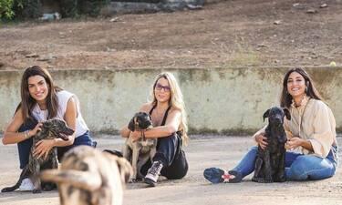 Σωτηροπούλου – Τσάνταλη: Ενώνουν τις δυνάμεις τους για τα αδέσποτα ζώα!