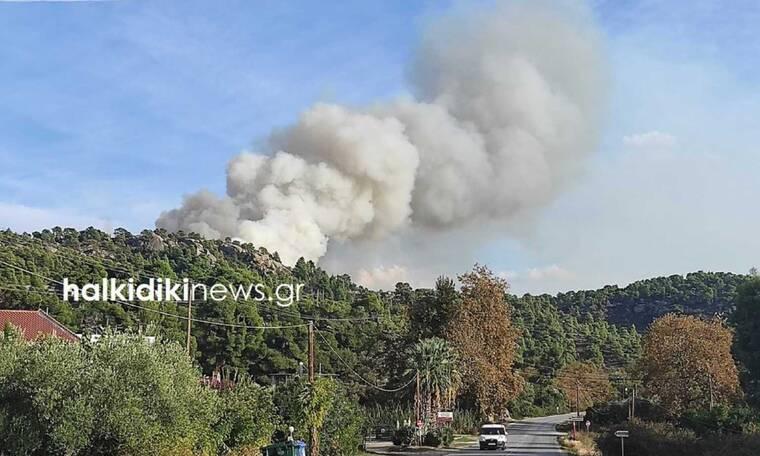 Φωτιά ΤΩΡΑ στη Χαλκιδική: Καίγεται το πευκοδάσος της Νικήτης
