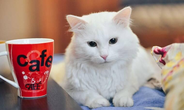 Αδιανόητα ανόητοι: 15 άτομα θετικά στον κορονοϊό μετά από πάρτι γενεθλίων... γάτας!