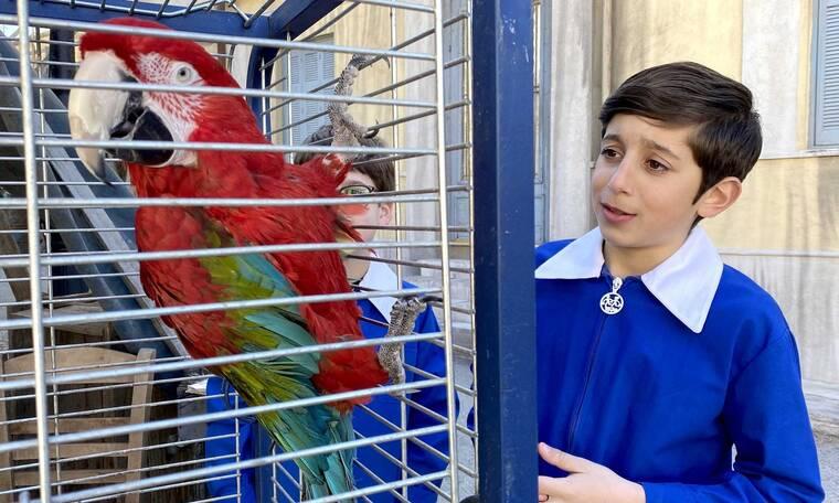Τα καλύτερά μας χρόνια: Ο παπαγάλος του κυρ Νίκου αναστατώνει τη γειτονιά!