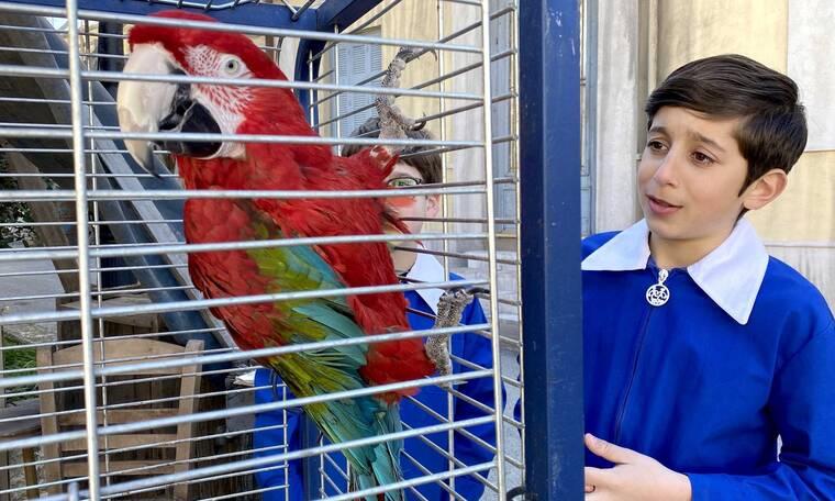 Τα καλύτερά μας χρόνια: Τα λόγια ενός παπαγάλου προκαλούν τριγμούς στη γειτονιά